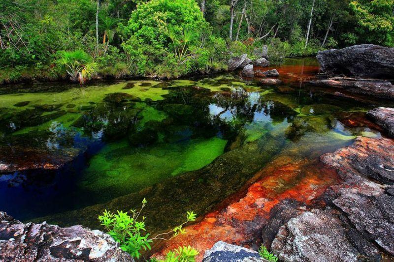 Karena kaya flora dan fauna sungai ini terlihat berwarna - warni
