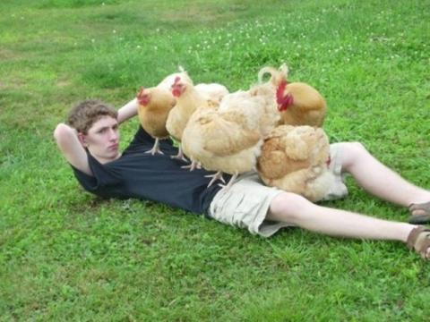 Ayam & Ayam & Ayam & Ayam Bersaudara