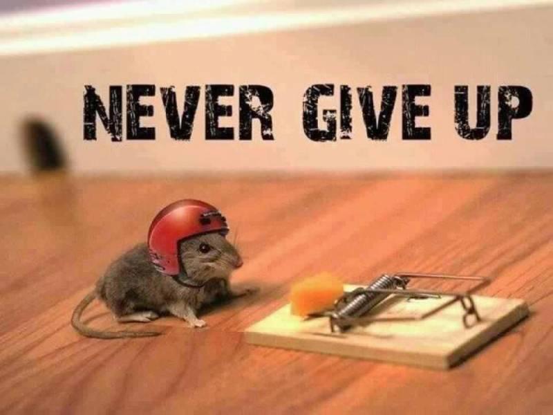 Tidak pernah menyerah