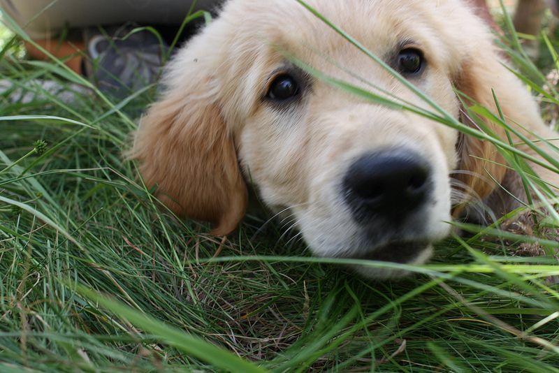 doggy doggy dog dog3