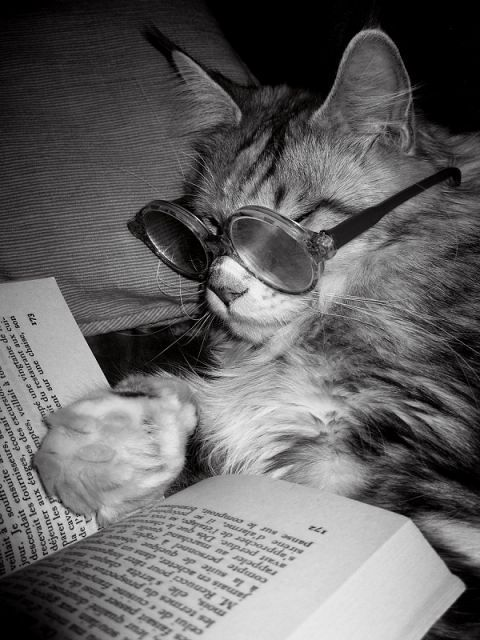 Kucing Pintar