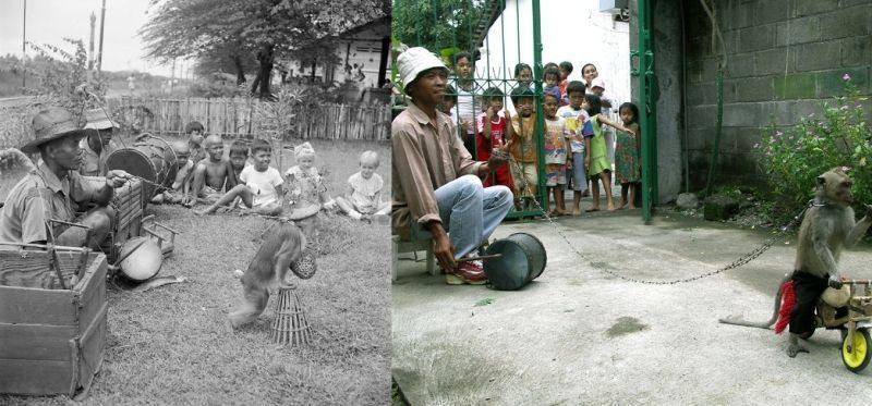 Topeng Monyet, Dulu dan Sekarang