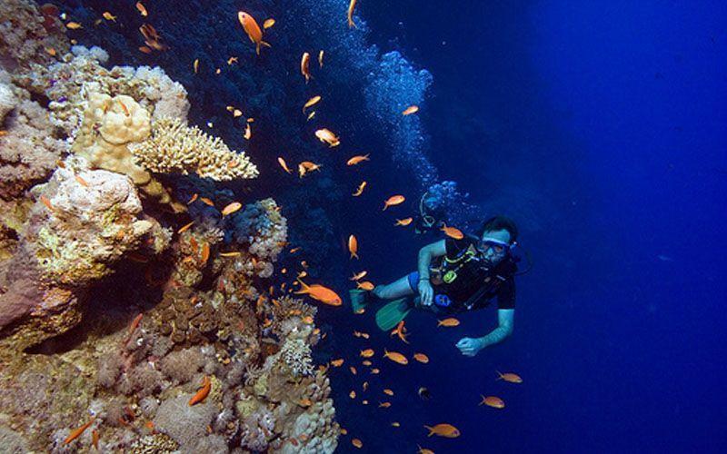 Keindahan bawah laut di The Great Hole
