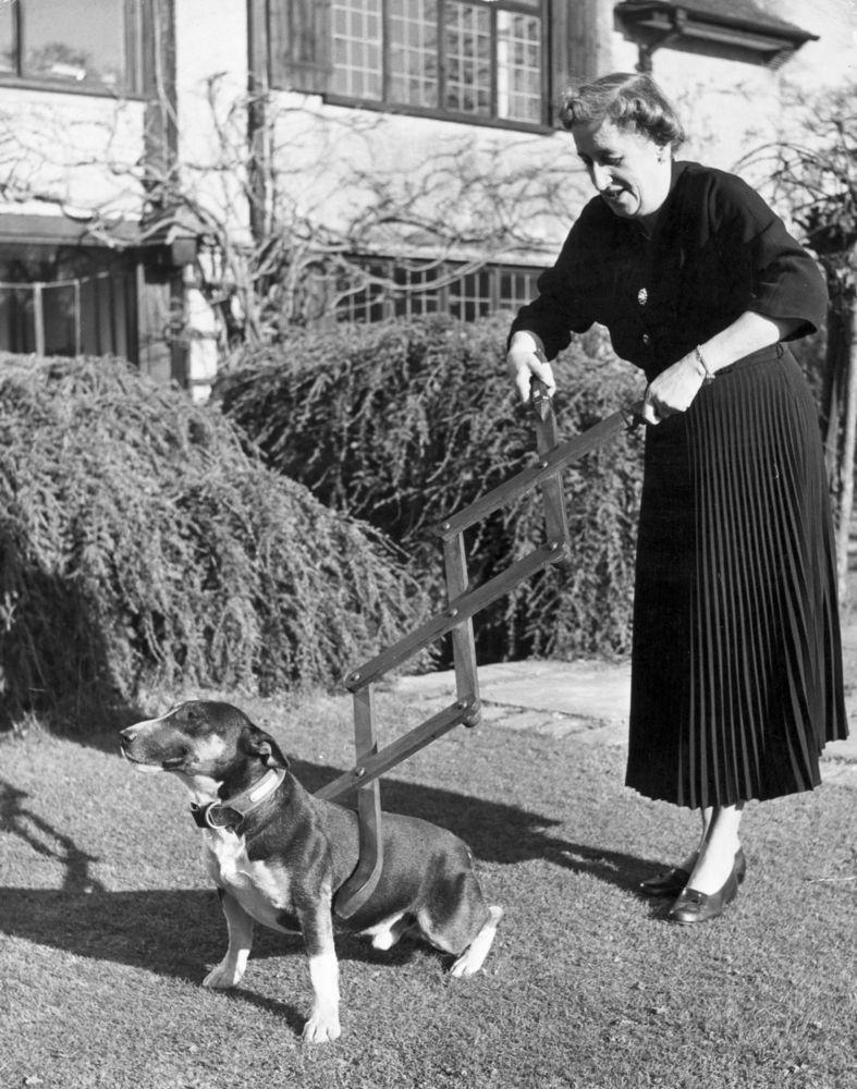 Gunakan alat ini untuk mengajari anjingmu disiplin