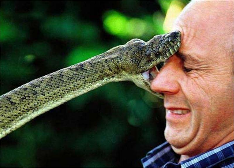 Bisa ular mematikan