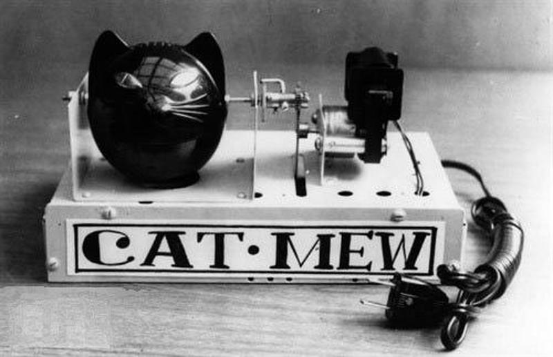 Cat - Mew