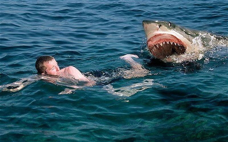 Serangan hiu