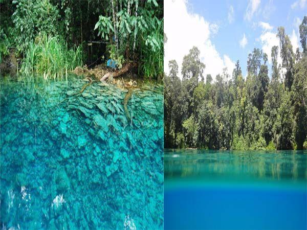 Hutan mangroove di danau cermin