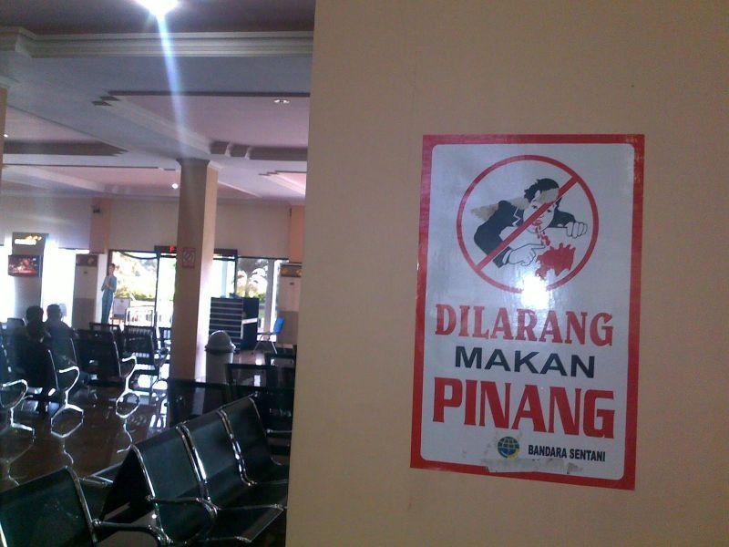 Dilarang makan pinang