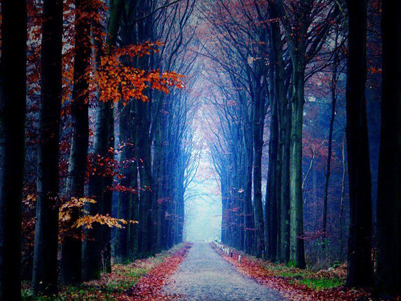 Terowongan pohon di Drenthe
