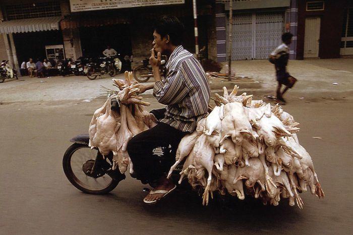 Pengangkut ayam tiren