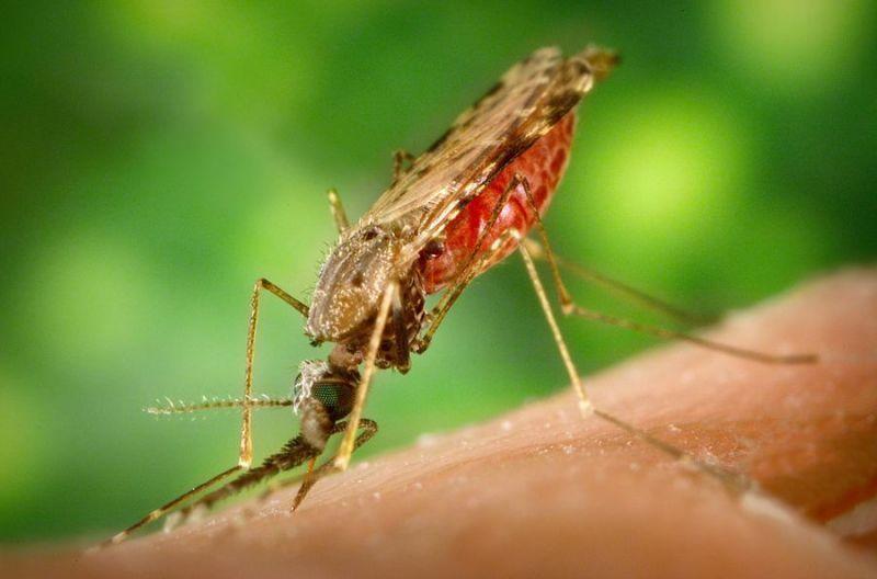 Nyamuk, pembunuh nomor 1