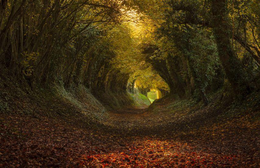 http://www.photobotos.com/tunnel-of-trees/