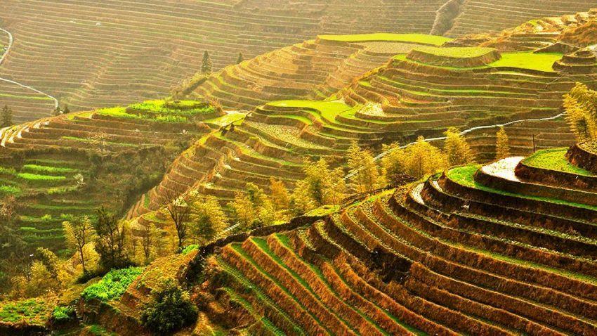Terasering di Yuangyang