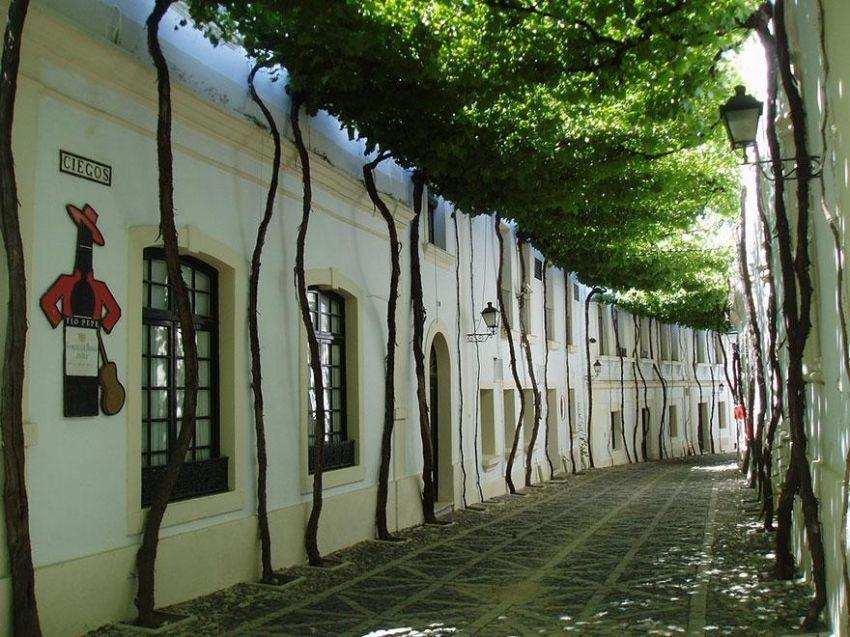 Sebuah jalanan yang tertutup kanopi dedaunan