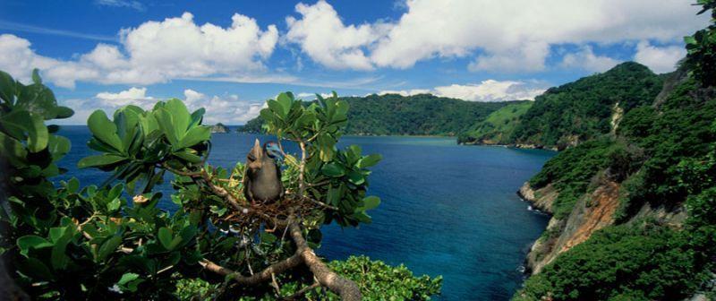 Pulau Cocos ini kaya akan flora dan fauna