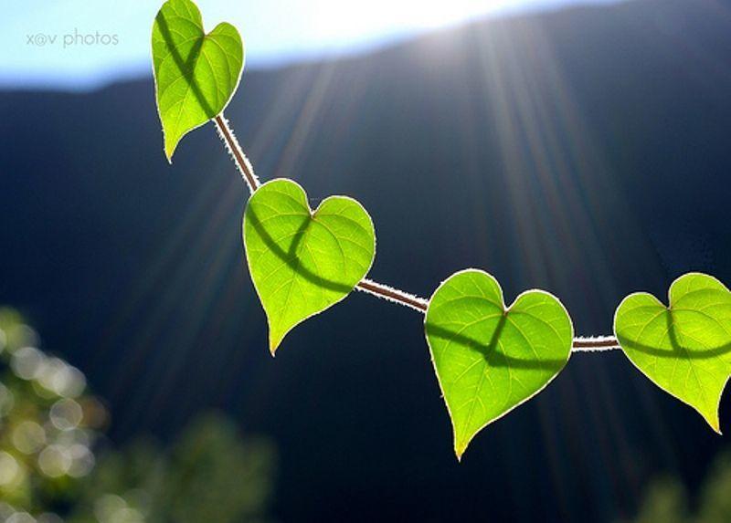 cinta alam dan seisinya