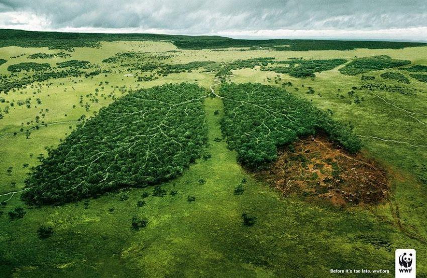 Jaga kelestarian hutan