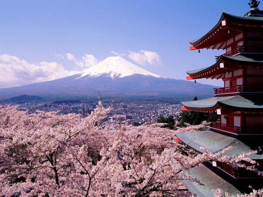 Bunga sakura dan gunung Fuji