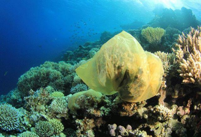 Kantong plastik membungkus koral di dasar laut