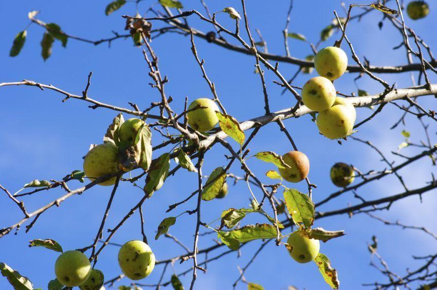 pohon juga bisa bikin kamu kenyang