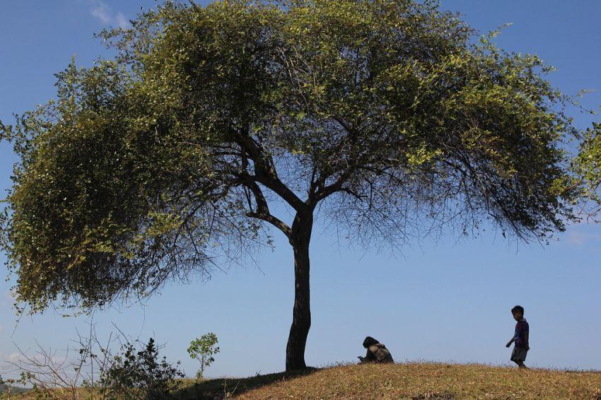 pepohonan punya efek menyembuhkan, lho!