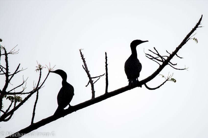 habitat bagi beberapa flora dan fauna
