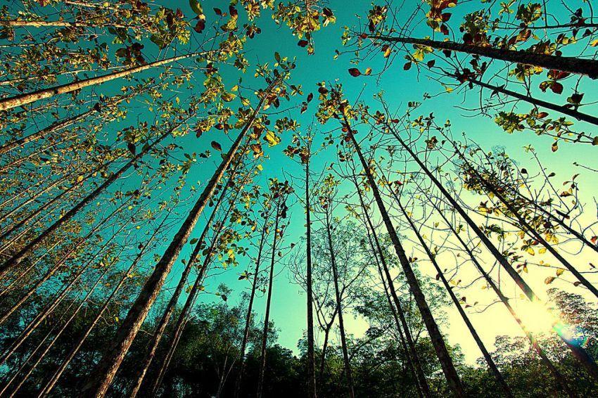 beberapa pohon bisa menjadi penanda musim untukmu