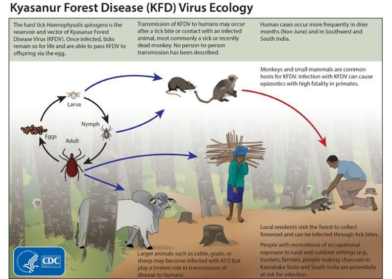kyasanur forest virus