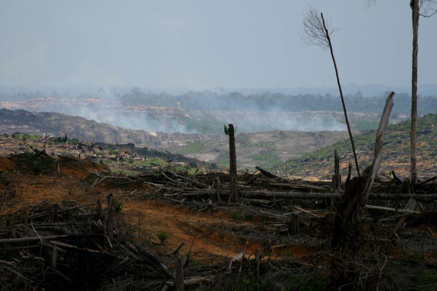 kondisi hutan semakin memprihatinkan tiap tahunnya