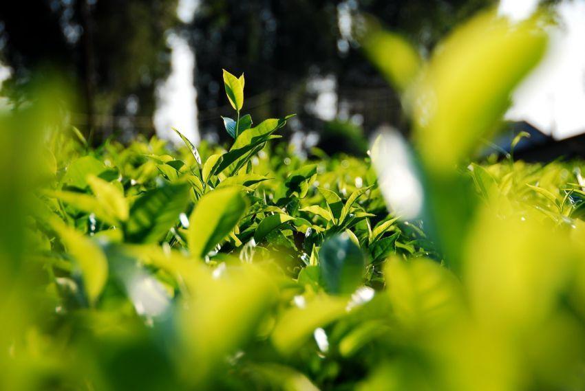 hijaunya dedaunan bisa menyegarkanmu