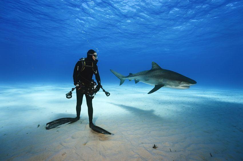 Coba deh menyelam sama hiu