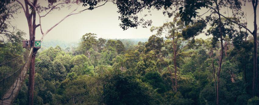 Canopy Birdge dan pemandangan sekitarnya