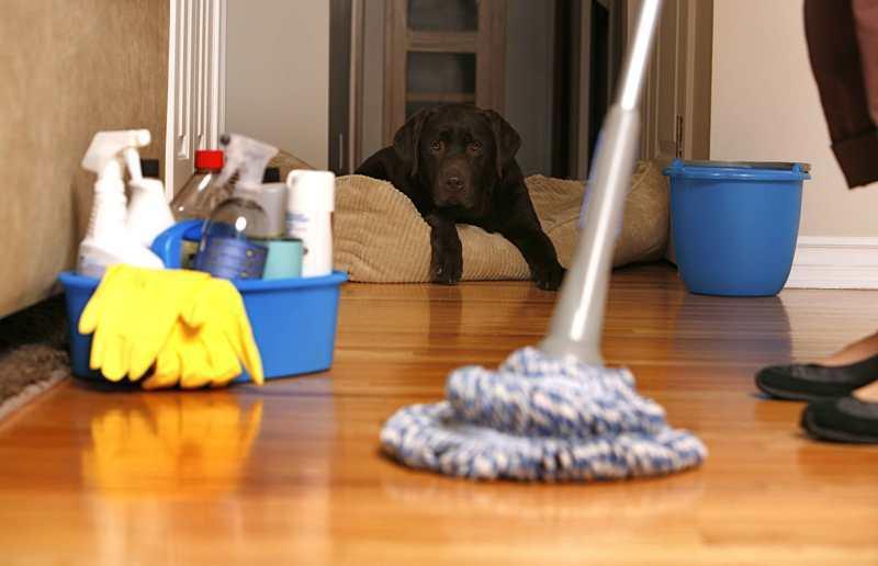 bersih-bersih rumah