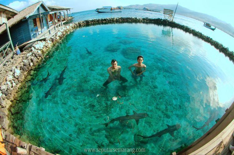 Berenang bareng hiu