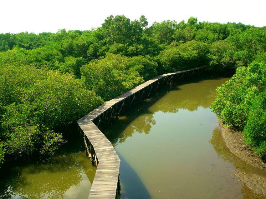 Hutan Mangrove Suwung Kauh