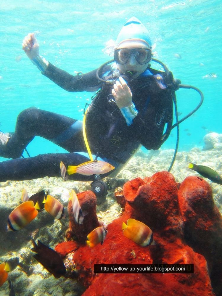 Bunaken, tempat kamu bisa bertemu clown fish