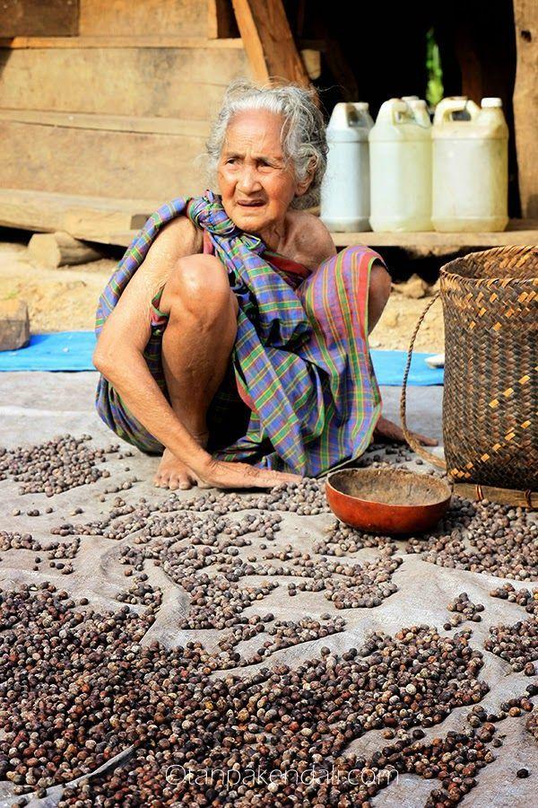 Seorang nenek sedang mengumpulkan kopi yang habis dijemur