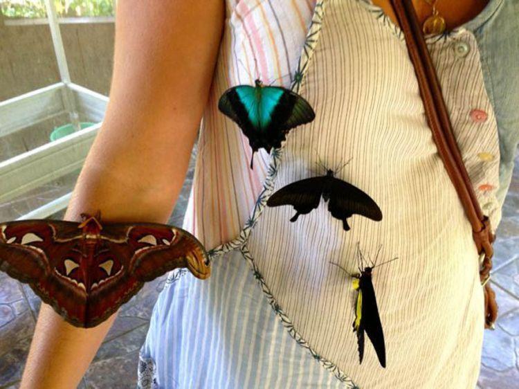 Bercengkerama dengan kupu-kupu