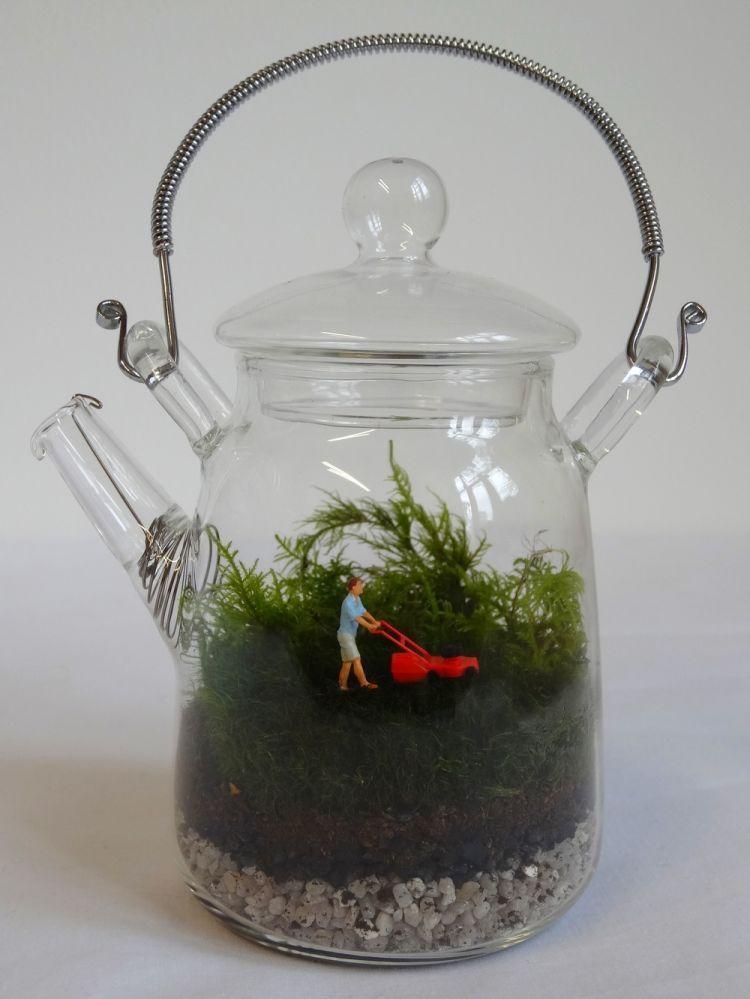 tea pot terrarium, why not?