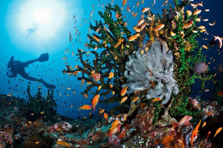 Diving spot di Pulau Weh.