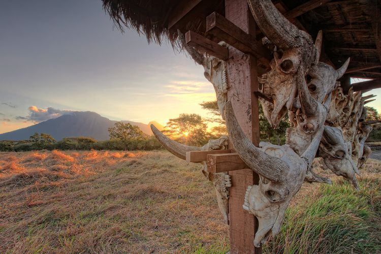 Bekol dengan latar Gunung Baluran
