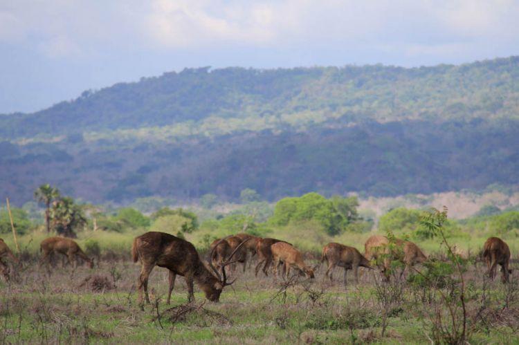 Safari di sabana Bekol