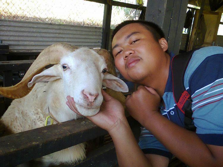 Selfie bareng domba Garut