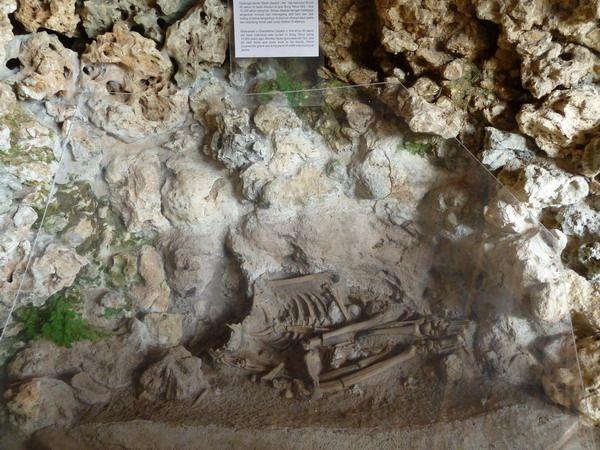 Kerangka manusia purba di Goa Song Terus