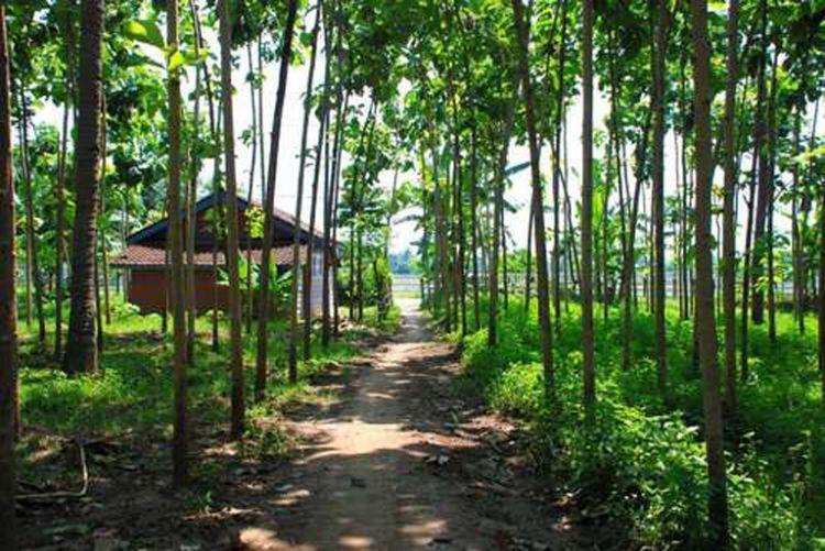 Pemandangan perkebunan di Kaliklatak