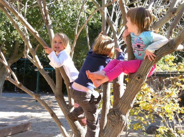 Memanjat pohon mengajarkan banyak hal