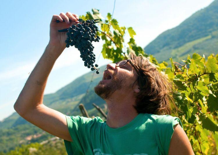 Makan anggur sama kulitnya