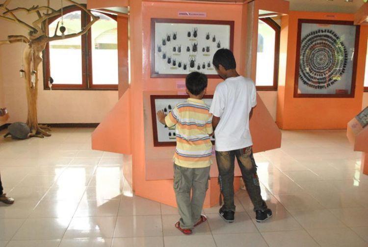 Salah satu sudut di Museum Serangga