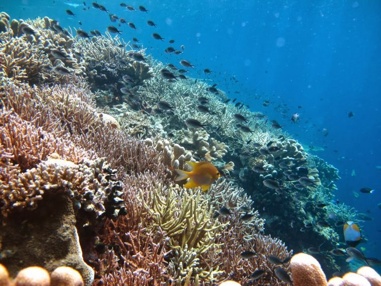 Eksotisme alam bawah laut Derawan